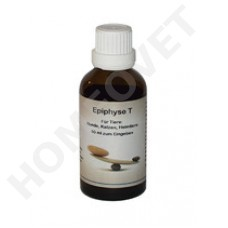 Supra-Cell Epiphyse HT